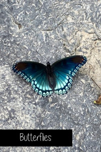 See butterflies and dragonflies of all colors as you hike to throughoug the Ouachita National Forest near Shady Lake campground in Arkansas.