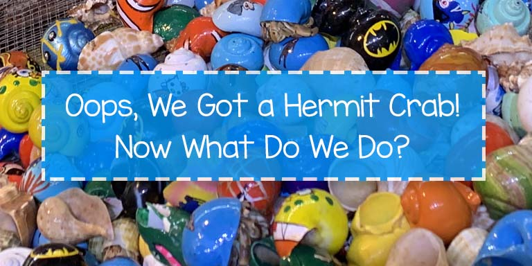 Caring for a Hermit Crab, Crabitat, How to Take Care of a Hermit Crab