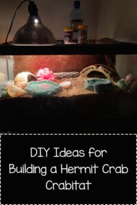DIY Hermit Crab Tank and Hermit Crabitat Ideas